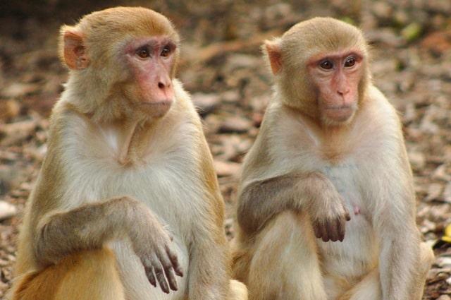 داستان کوتاه دو میمون و هزارپا
